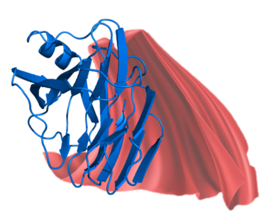 3D structure of a xylanase